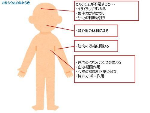 カルシウム画像サイト.jpg